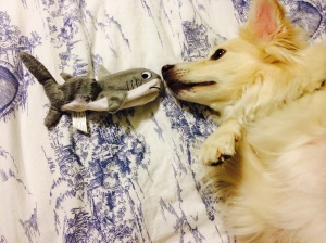 bailey and shark toy