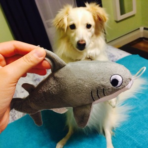 Bailey and Shark