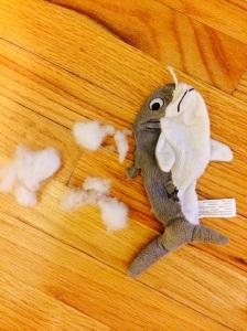 shark torn apart