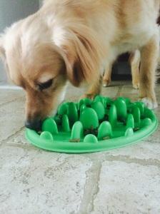 slow feeder dog bowl test
